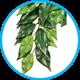 Растения, лианы
