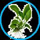 Растения живые