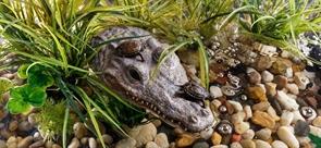 Остров для акватеррариума Exo Terra - крокодил 21x10,5x4,5 см.