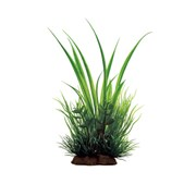 ArtUniq Acorus mix 20 - Акорус в миксе растений, 12x10x20 см
