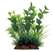 ArtUniq Bacopa mix 12 - Бакопа в миксе растений, 10x5x12 см