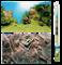 Фон пленка-постер Juwel /камни-растительный/ 150х60 см. - фото 19710